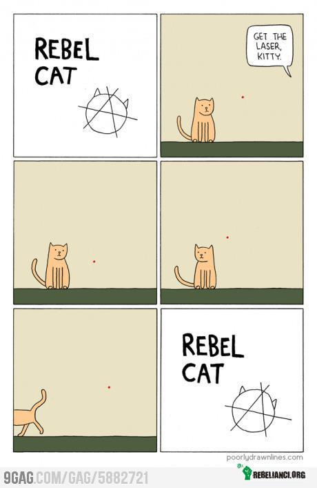 Rebel cat! –