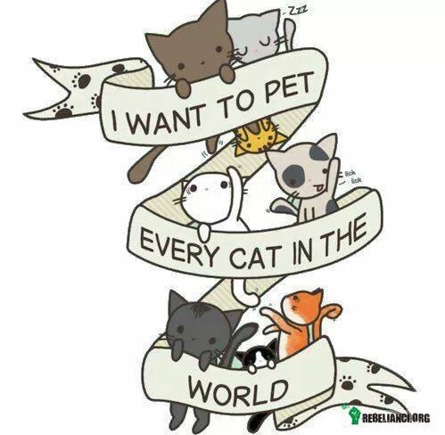 I want to pet every cat in the world! –