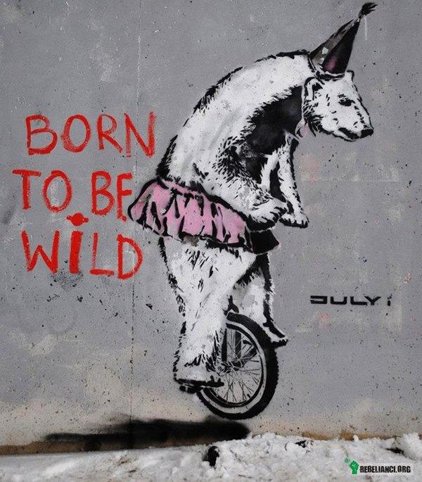 Born to be wild –