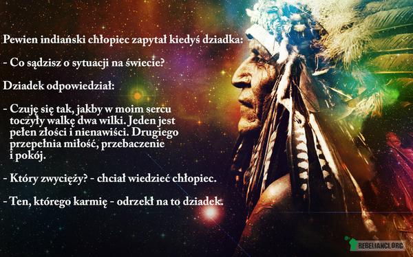 Wilki –