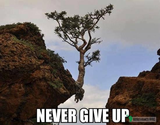 Nigdy się nie poddawaj! –