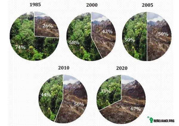 Znalezione obrazy dla zapytania wycinanie lasów na ziemi