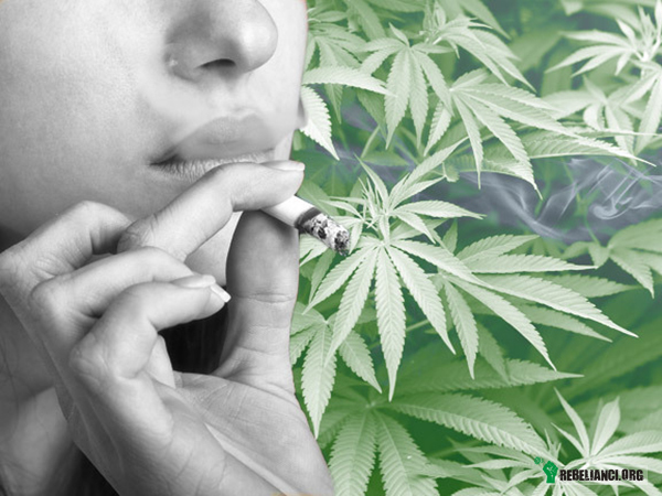 Czym zanieczyszcza się marihuanę? Sprawdź jak rozpoznać lipny towar –